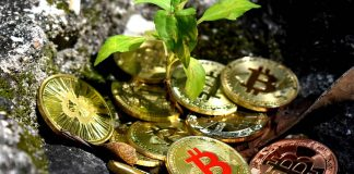 Strategies-of-Saving-Crypto-Tax-in-the-Current-Bull-Market-on-contribution-space
